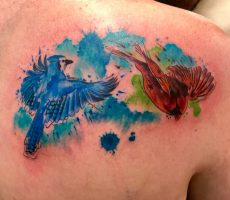 watercolor tattoo blue jay and red bird New York